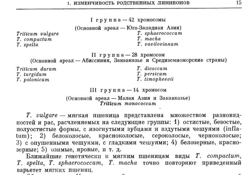 chromosomVAVILOV.jpg